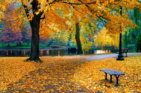 Autumnal scene in a park