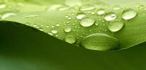 Water on leaf.