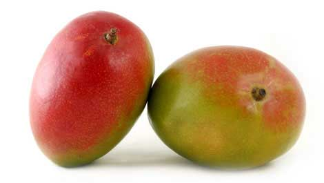 Two mango fruits